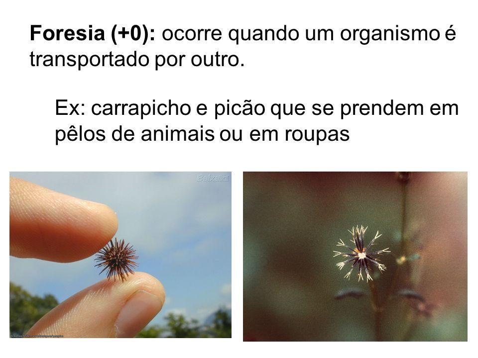 Foresia (+0): ocorre quando um organismo é