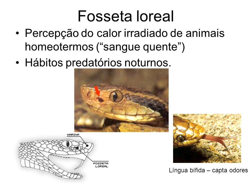 Fosseta loreal Percepção do calor irradiado de animais homeotermos ( sangue quente ) Hábitos predatórios noturnos.