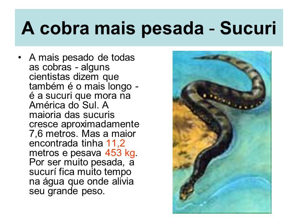 A cobra mais pesada - Sucuri