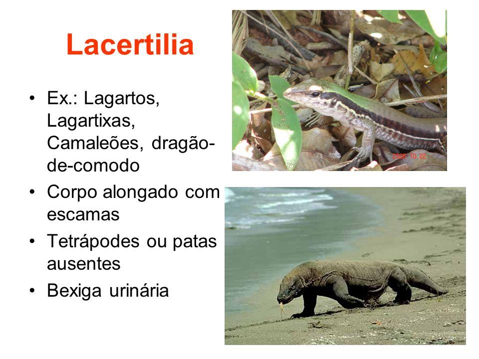 Lacertilia Ex.: Lagartos, Lagartixas, Camaleões, dragão-de-comodo
