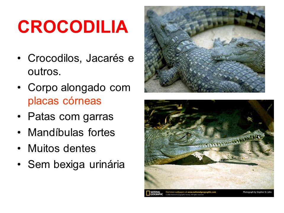 CROCODILIA Crocodilos, Jacarés e outros.