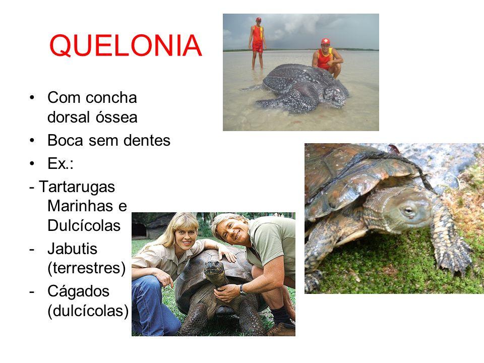 QUELONIA Com concha dorsal óssea Boca sem dentes Ex.: