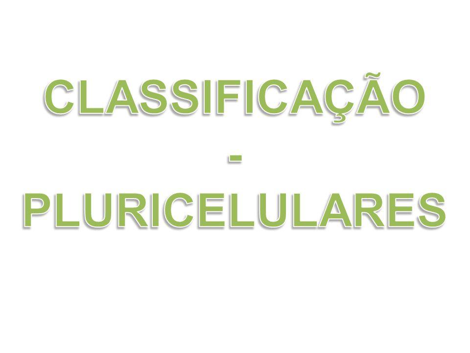 CLASSIFICAÇÃO - PLURICELULARES