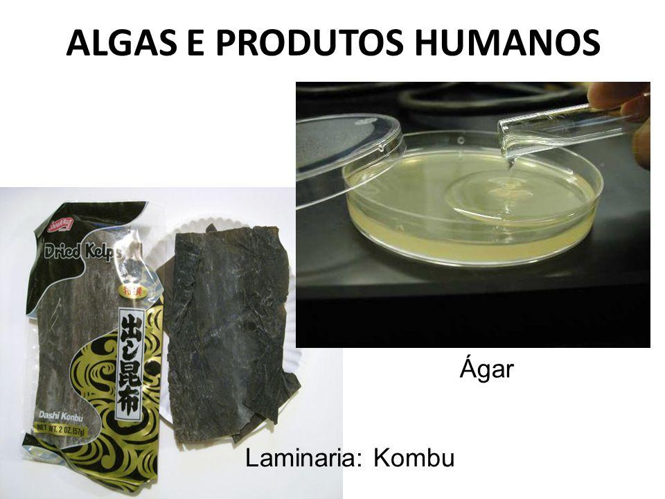ALGAS E PRODUTOS HUMANOS