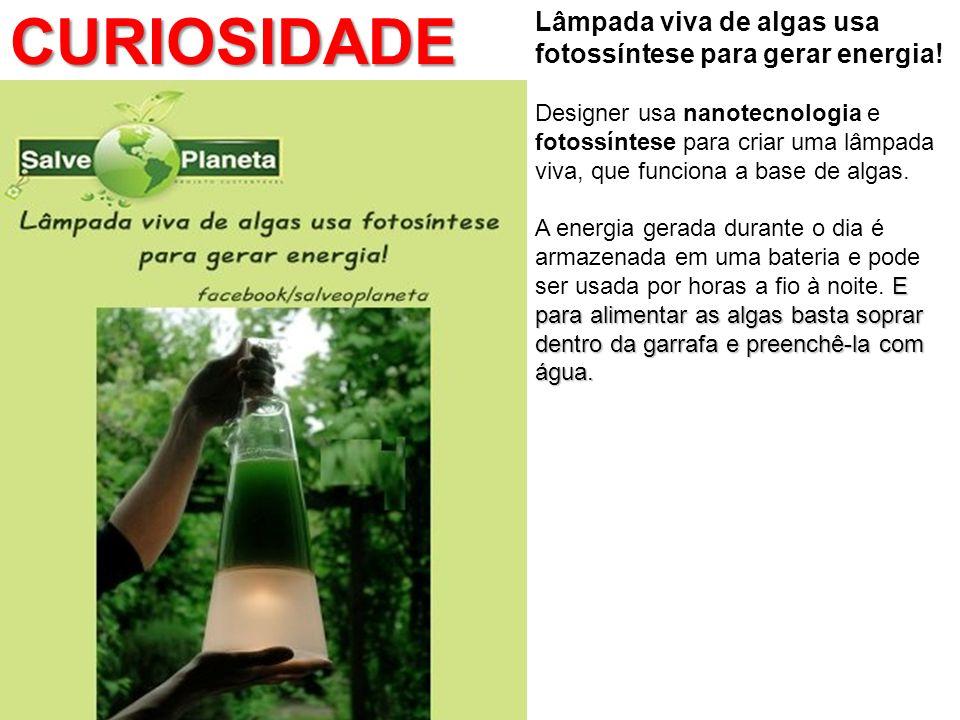 CURIOSIDADE Lâmpada viva de algas usa fotossíntese para gerar energia!
