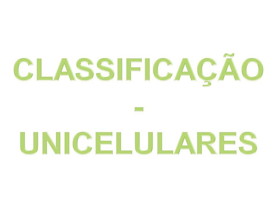 CLASSIFICAÇÃO - UNICELULARES