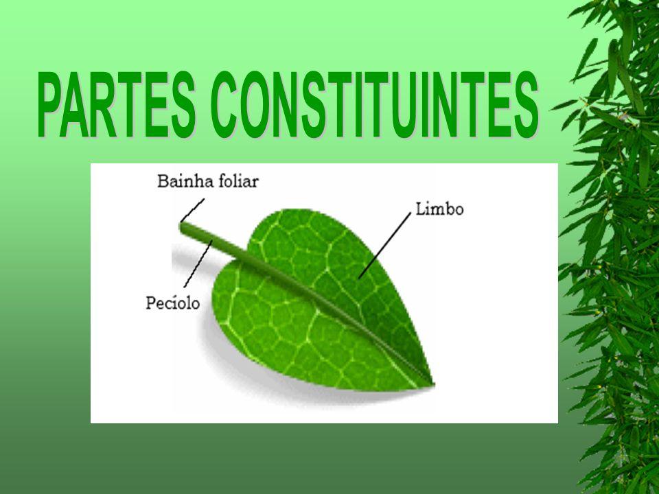 PARTES CONSTITUINTES