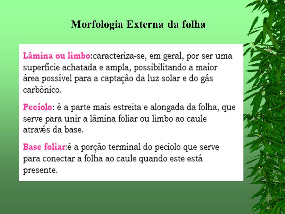 Morfologia Externa da folha
