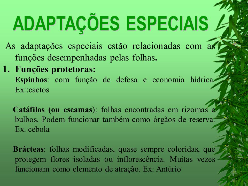 ADAPTAÇÕES ESPECIAIS As adaptações especiais estão relacionadas com as funções desempenhadas pelas folhas.
