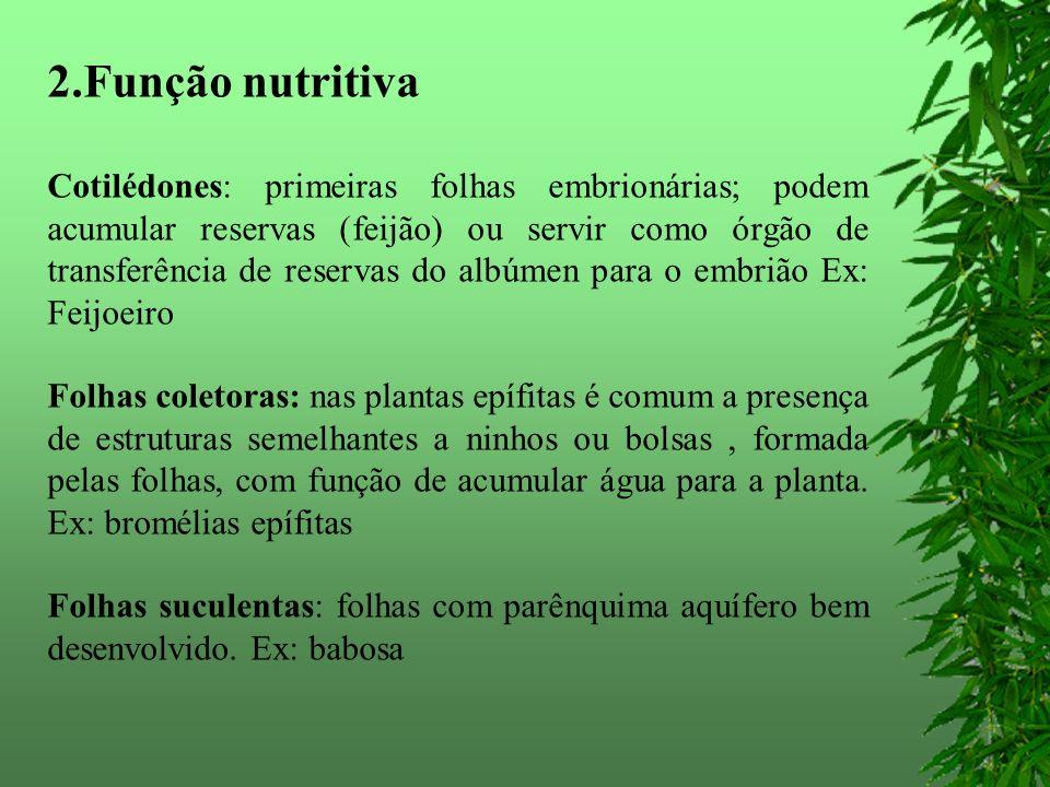 2.Função nutritiva