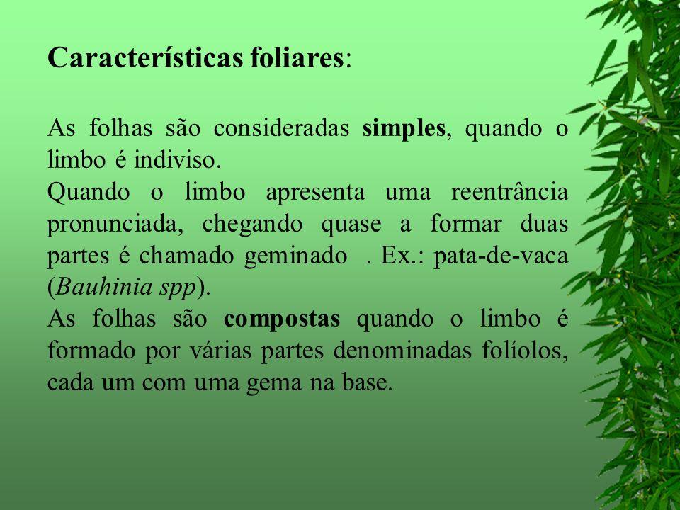 Características foliares: