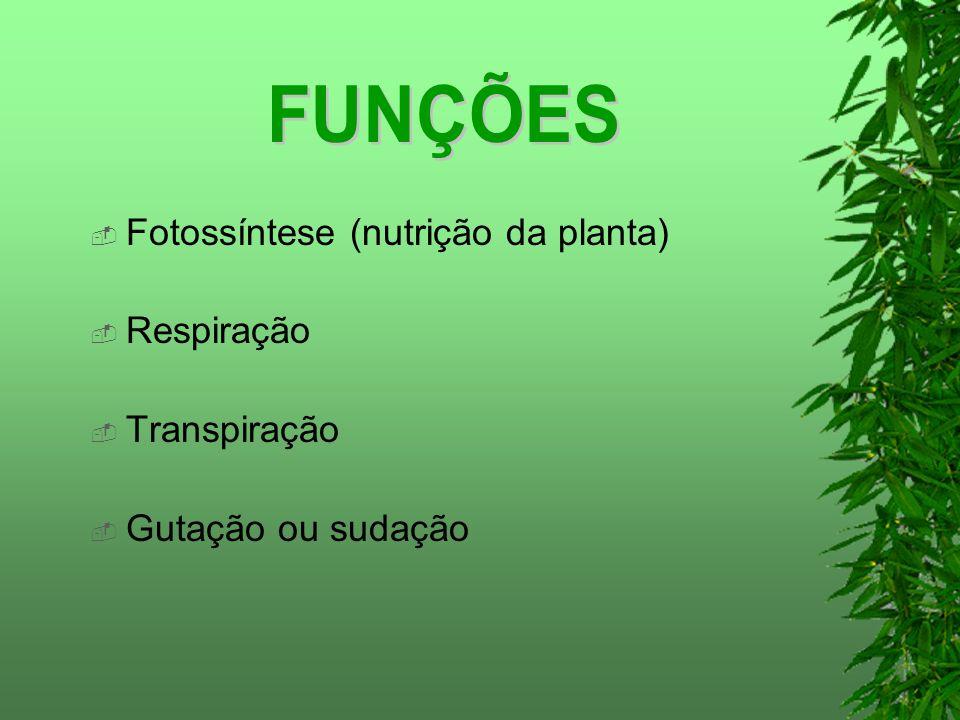 FUNÇÕES Fotossíntese (nutrição da planta) Respiração Transpiração