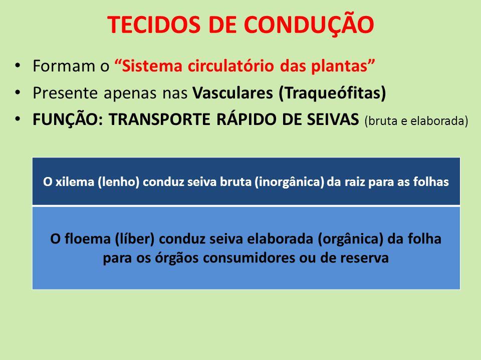 TECIDOS DE CONDUÇÃO Formam o Sistema circulatório das plantas
