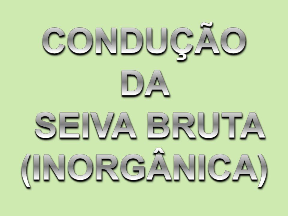 CONDUÇÃO DA SEIVA BRUTA (INORGÂNICA)