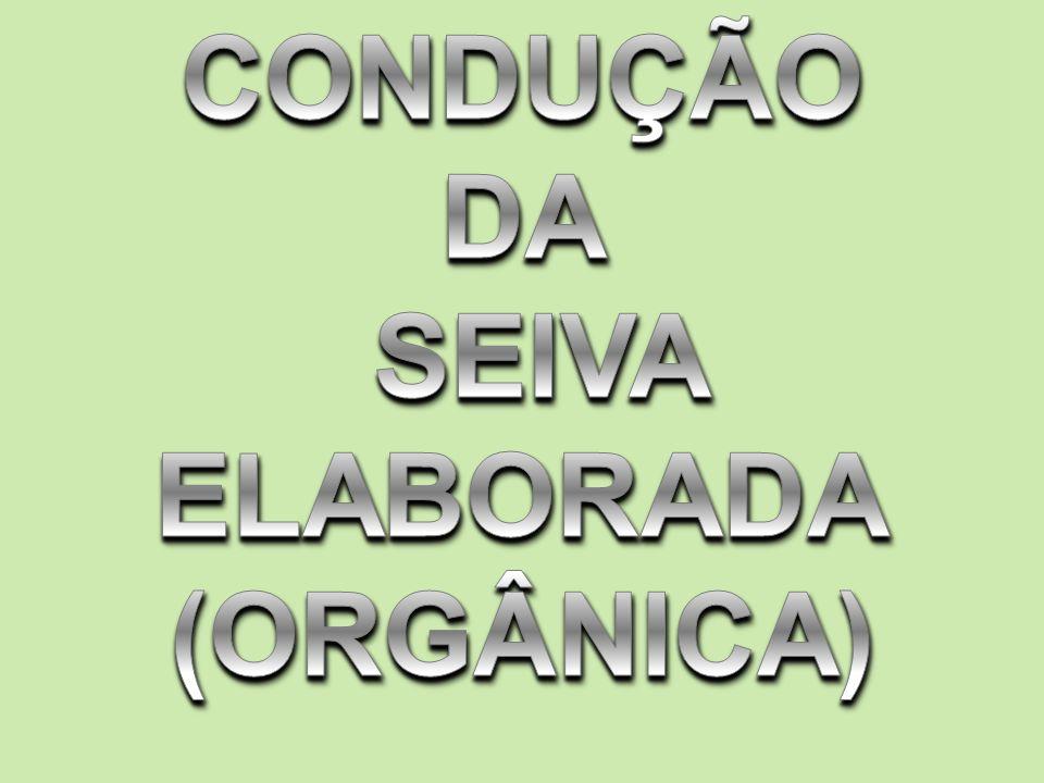 CONDUÇÃO DA SEIVA ELABORADA (ORGÂNICA)