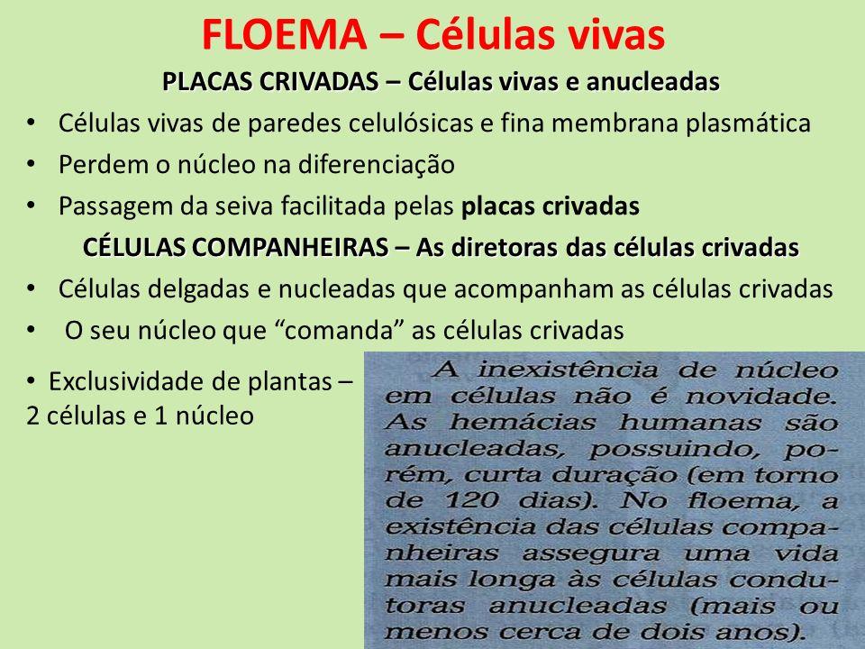 FLOEMA – Células vivas PLACAS CRIVADAS – Células vivas e anucleadas