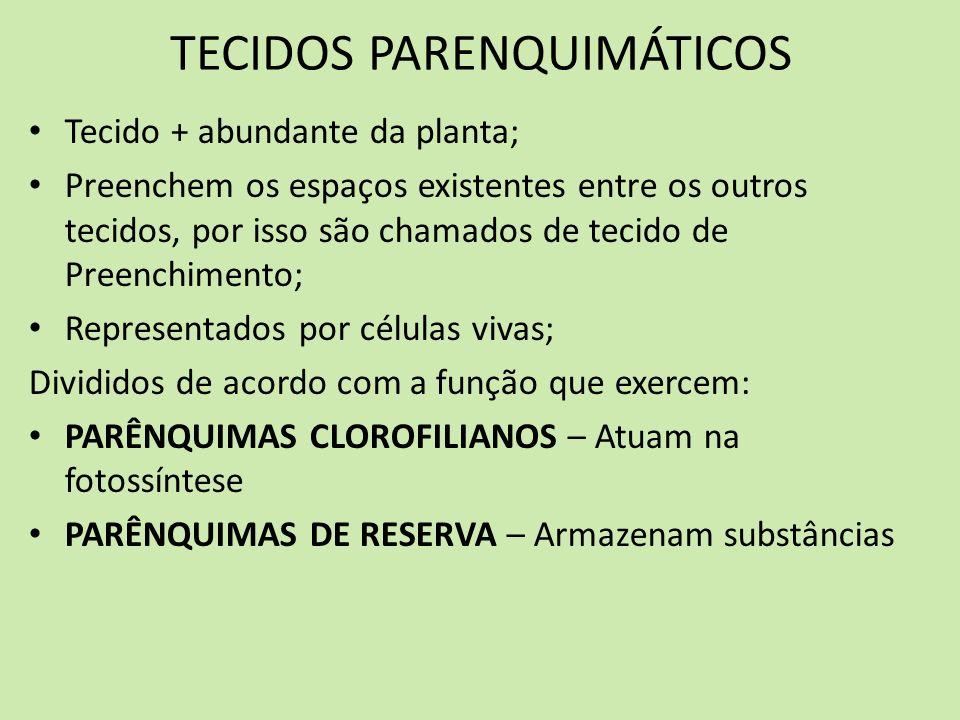 TECIDOS PARENQUIMÁTICOS