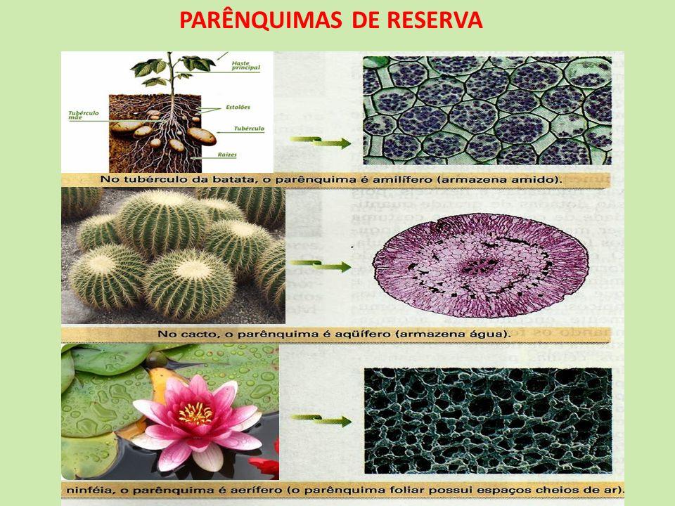 PARÊNQUIMAS DE RESERVA