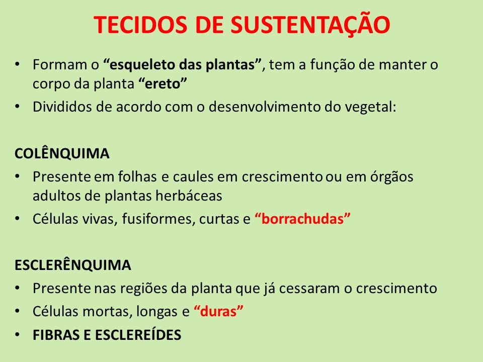TECIDOS DE SUSTENTAÇÃO