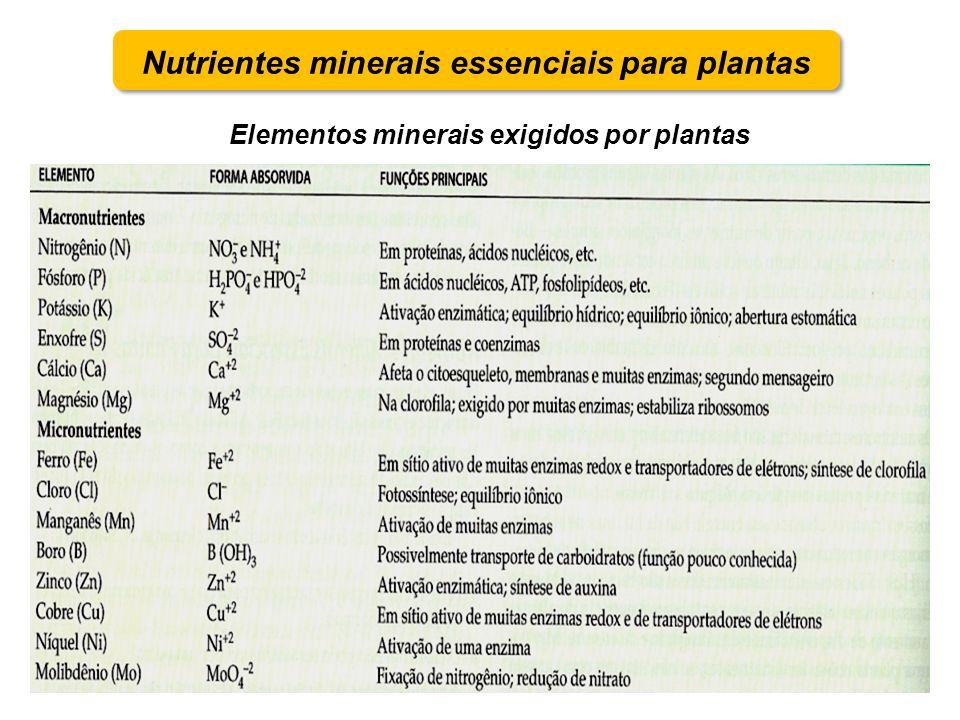 Nutrientes minerais essenciais para plantas