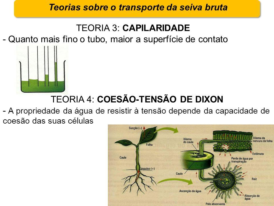 Teorias sobre o transporte da seiva bruta