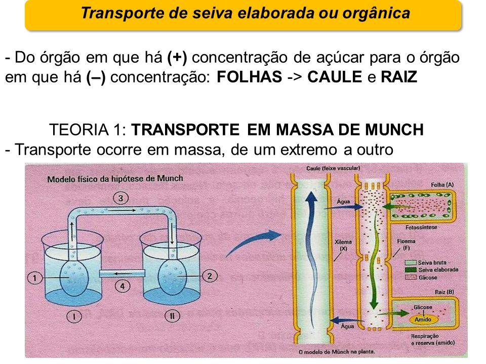 Transporte de seiva elaborada ou orgânica