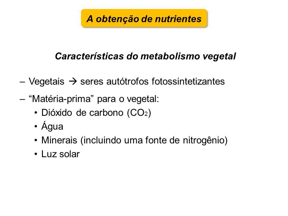 A obtenção de nutrientes Características do metabolismo vegetal