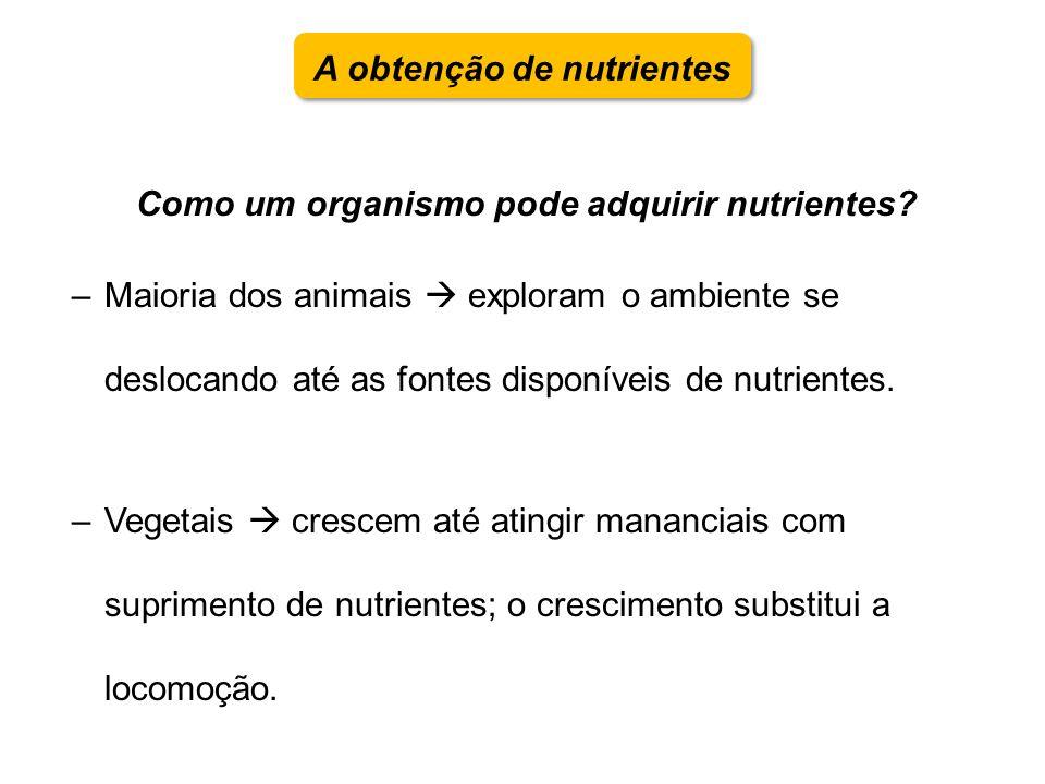 A obtenção de nutrientes Como um organismo pode adquirir nutrientes