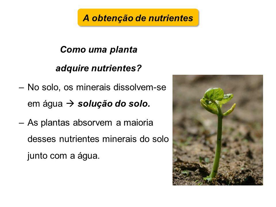 A obtenção de nutrientes