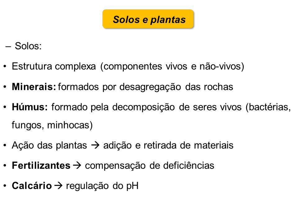 Solos e plantas Solos: Estrutura complexa (componentes vivos e não-vivos) Minerais: formados por desagregação das rochas.