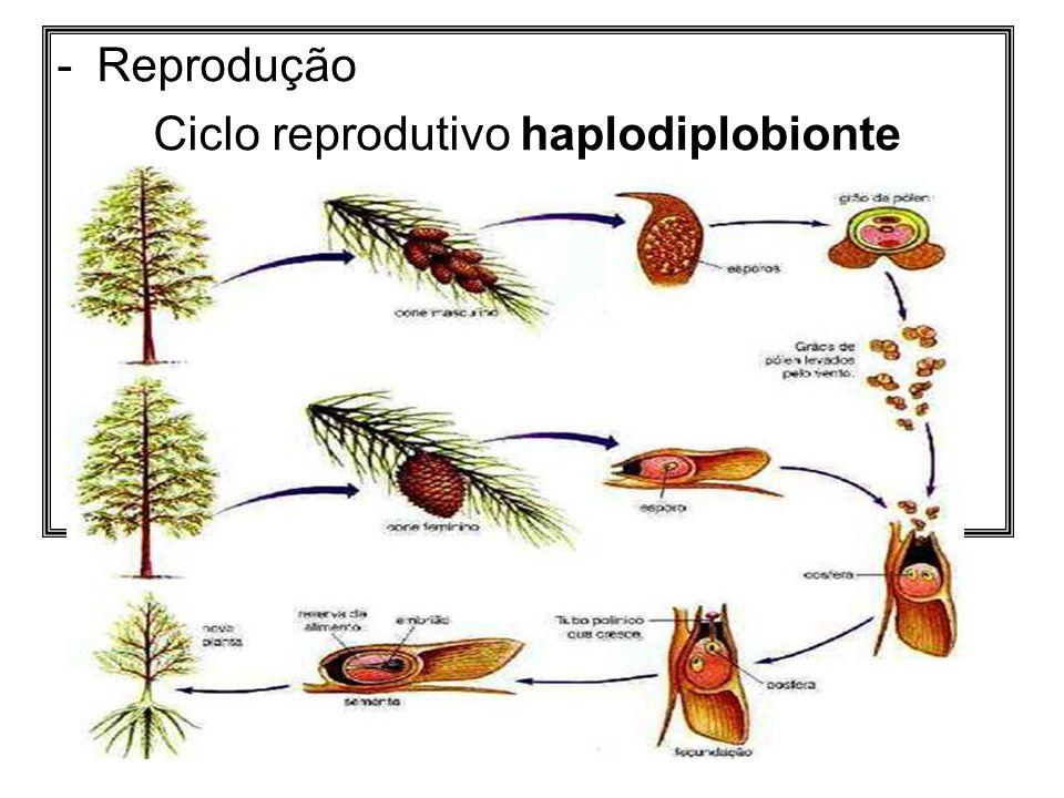 Ciclo reprodutivo haplodiplobionte