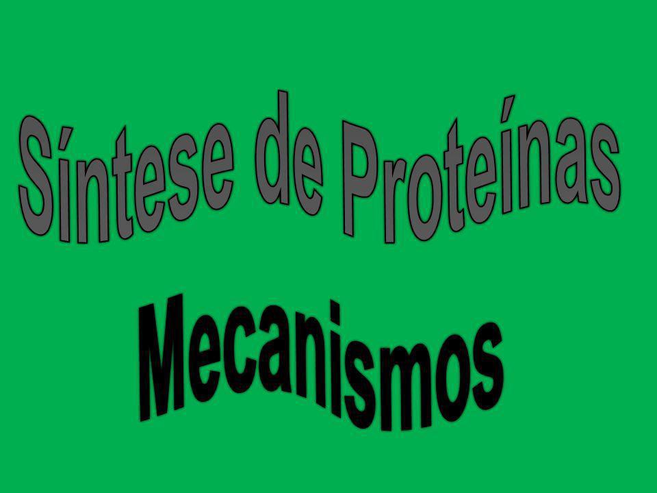 Síntese de Proteínas Mecanismos