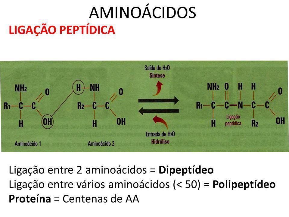 AMINOÁCIDOS LIGAÇÃO PEPTÍDICA Ligação entre 2 aminoácidos = Dipeptídeo