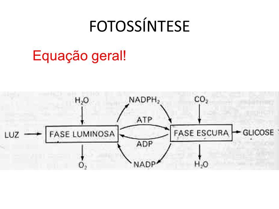 FOTOSSÍNTESE Equação geral!