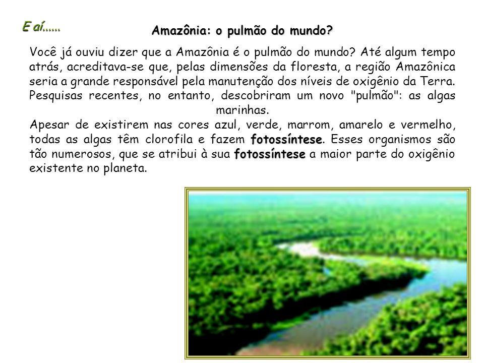 Amazônia: o pulmão do mundo