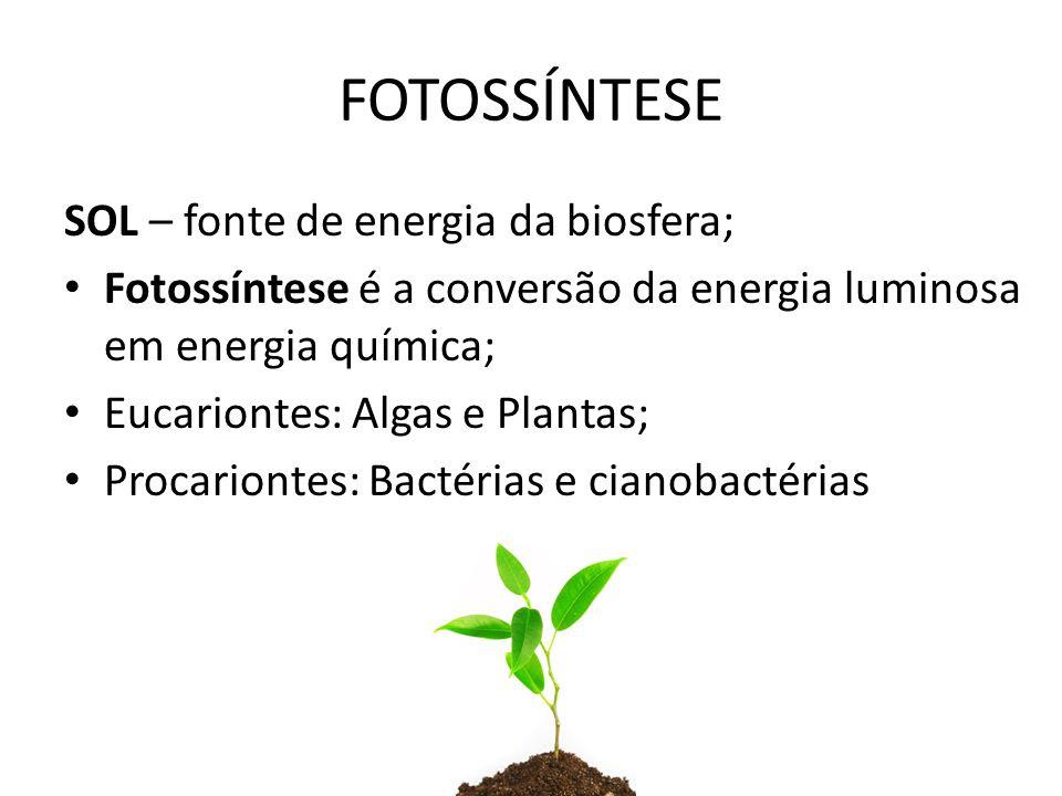 FOTOSSÍNTESE SOL – fonte de energia da biosfera;