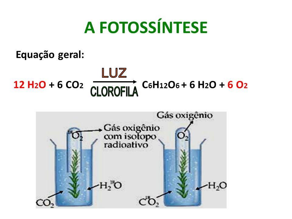 A FOTOSSÍNTESE Equação geral: 12 H2O + 6 CO2 C6H12O6 + 6 H2O + 6 O2