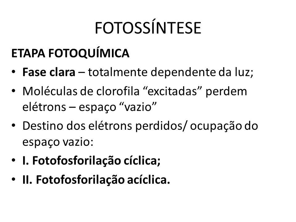FOTOSSÍNTESE ETAPA FOTOQUÍMICA