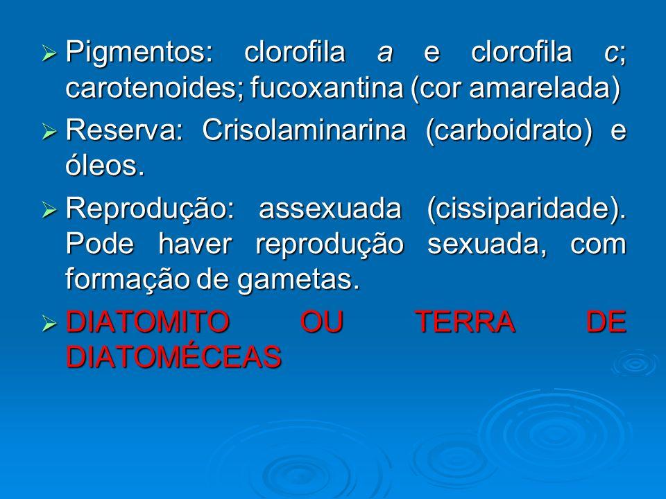 Pigmentos: clorofila a e clorofila c; carotenoides; fucoxantina (cor amarelada)
