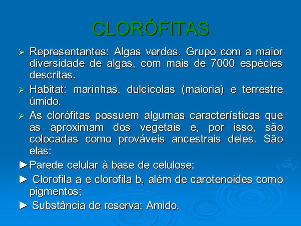 CLORÓFITASRepresentantes: Algas verdes. Grupo com a maior diversidade de algas, com mais de 7000 espécies descritas.