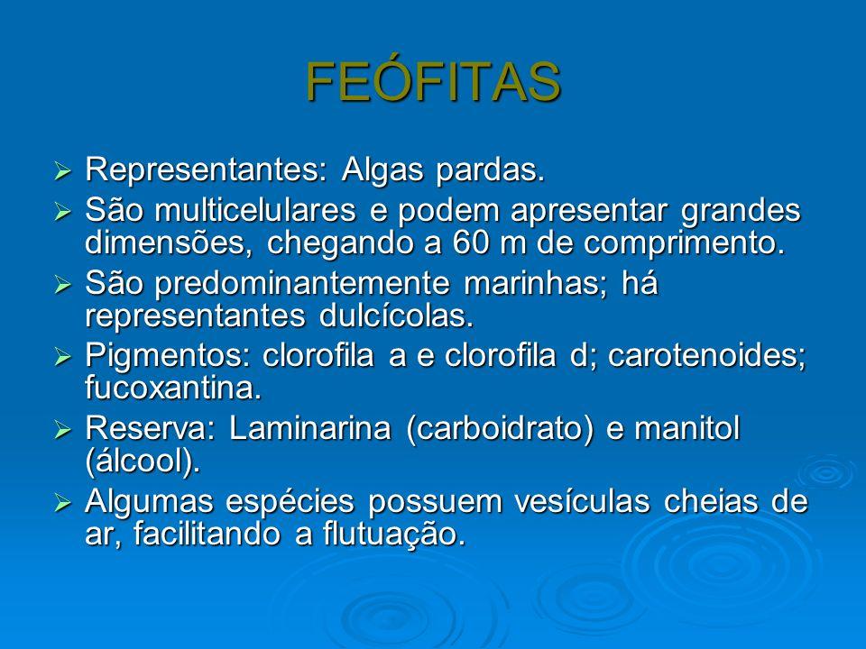 FEÓFITAS Representantes: Algas pardas.