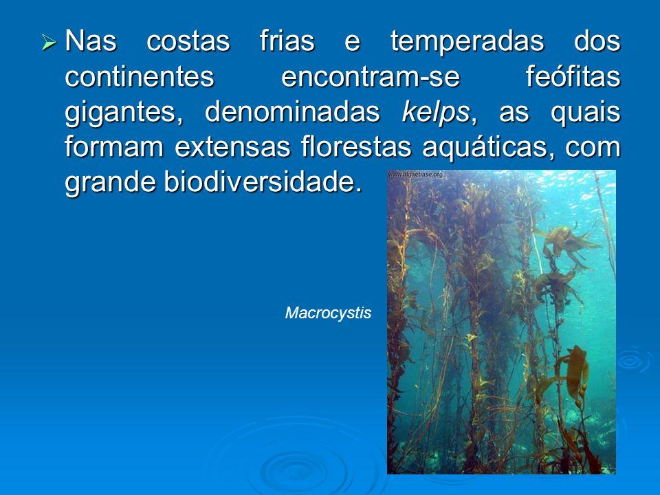 Nas costas frias e temperadas dos continentes encontram-se feófitas gigantes, denominadas kelps, as quais formam extensas florestas aquáticas, com grande biodiversidade.