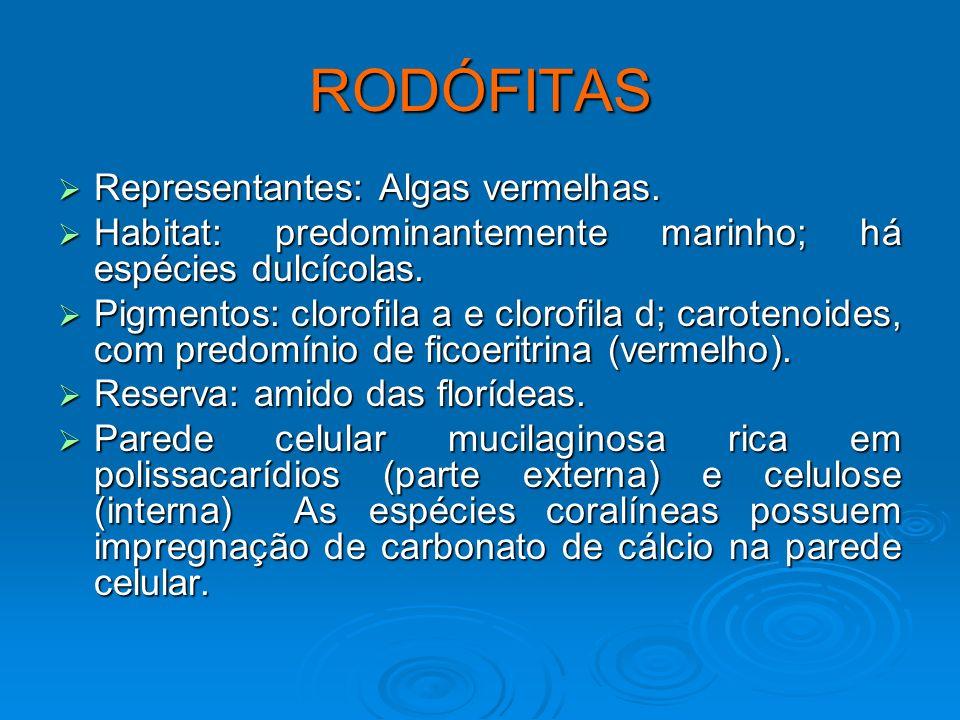 RODÓFITAS Representantes: Algas vermelhas.