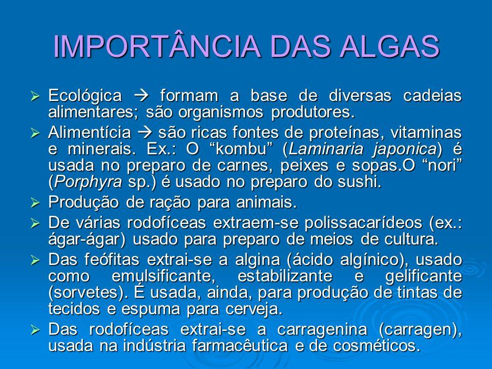 IMPORTÂNCIA DAS ALGASEcológica  formam a base de diversas cadeias alimentares; são organismos produtores.