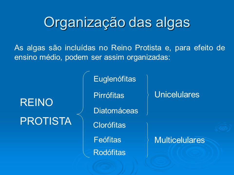 Organização das algas REINO PROTISTA Unicelulares Multicelulares