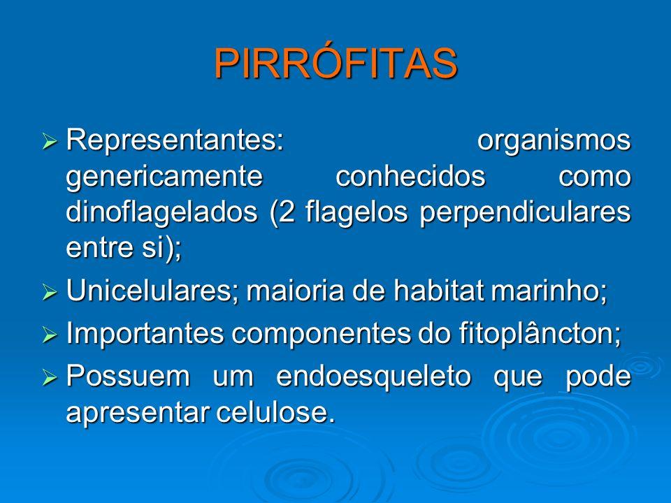 PIRRÓFITASRepresentantes: organismos genericamente conhecidos como dinoflagelados (2 flagelos perpendiculares entre si);