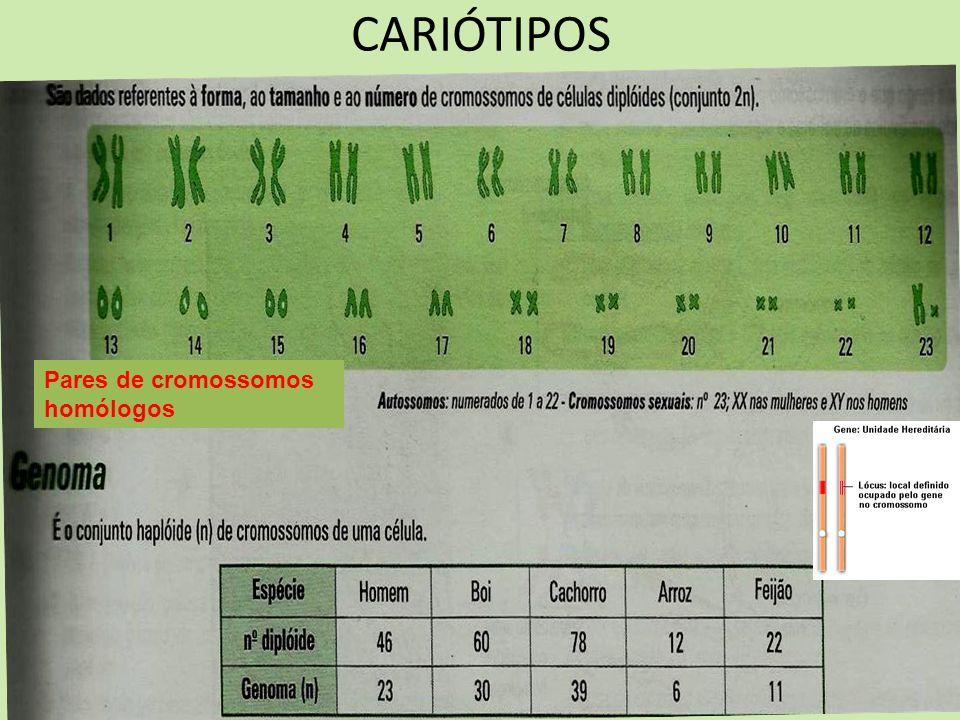 CARIÓTIPOS Pares de cromossomos homólogos