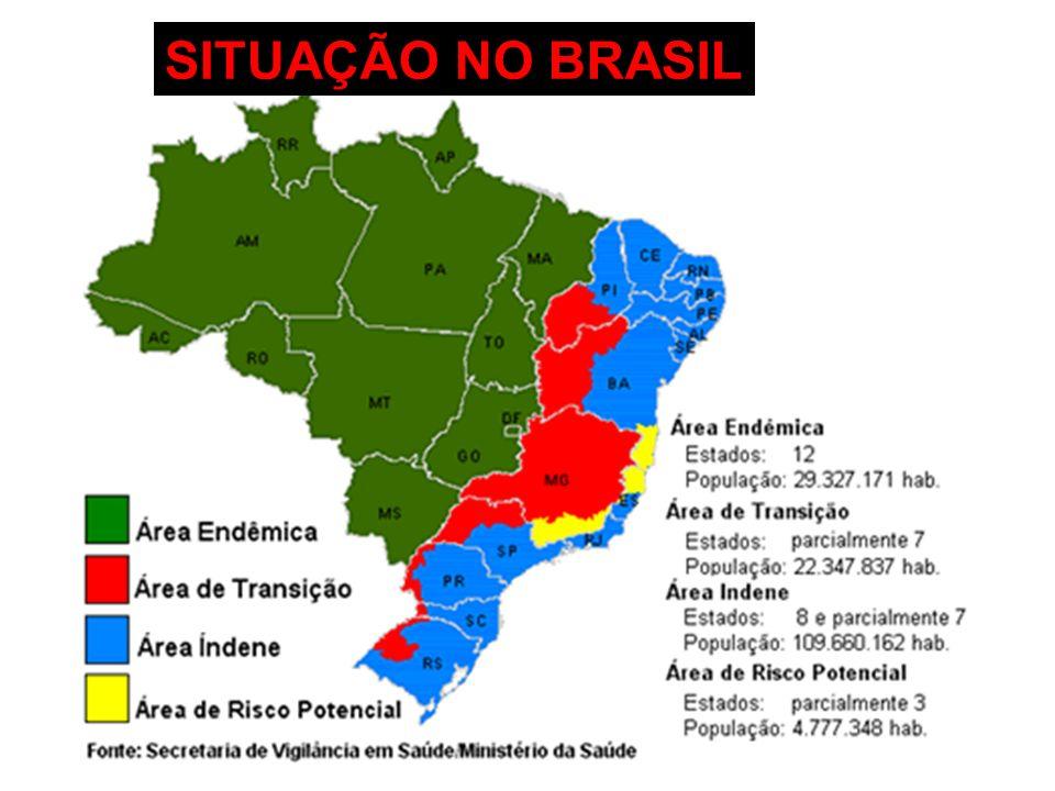 SITUAÇÃO NO BRASIL