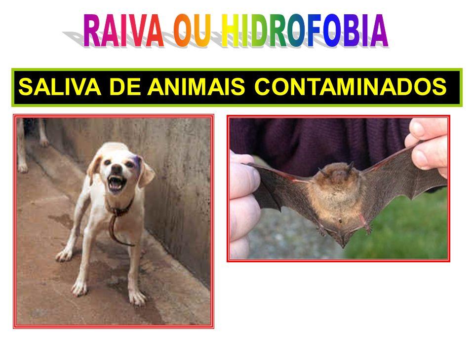 RAIVA OU HIDROFOBIA SALIVA DE ANIMAIS CONTAMINADOS
