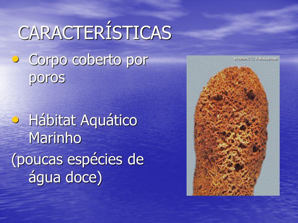 CARACTERÍSTICAS Corpo coberto por poros Hábitat Aquático Marinho
